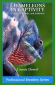Chameleons in Captivity (Panthers, Veileds, and Jacksons)