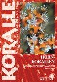 Hornkorallen im Meerwasseraquarium,