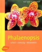 Phalaenopsis - schick - anmutig - blütenreich