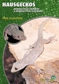Hausgeckos Hemidactylus frenatus & Hemidactylus flaviviridis