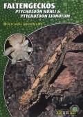 Faltengeckos (Ptychozoon kuhli & Ptychozoon lionotum)