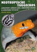 Neotropische Taggeckos (Gonatodes albogularis, Gonatodes fuscus & Gonatodes vittatus),