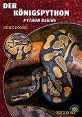 Der Königspython (Python regius)