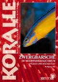 Zwergbarsche im Meerwasseraquarium - Pflege und Nachzucht