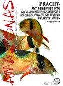Prachtschmerlen Chromobotia Macracanthus und weitere beliebte Arten