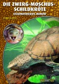 Zwerg-Moschusschildkröte Sternotherus minor