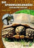 Spornschildkröte Geochelone sulcata