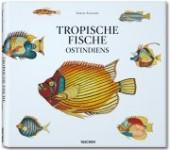 Tropische Fische Ostindiens