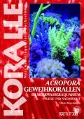 Geweihkorallen - Acropora