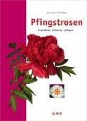 Pfingstrosen - Auswählen, Pflanzen, Pflegen
