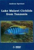Lake Malawi Cichlids from Tanzania