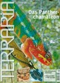 Panther-Chamäleon