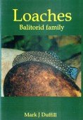 Loaches - Balitorid family