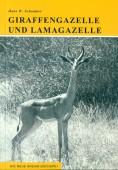 Giraffengazelle und Lamagazelle