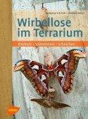 Wirbellose im Terrarium - Insekten - Spinnentiere - Schnecken