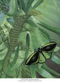 Smaragdwaran - Varanus prasinus