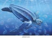 Lederschildkröte - Dermochelys coriacea