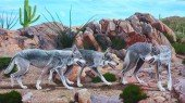Mexikanischer Wolf - Canis lupus baileyi
