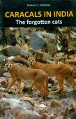 Caracals in India - The forgotten Cats