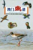 Macao Bird Report