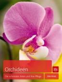 Orchideen Die schönsten Arten und ihre Pflege