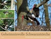 Geheimnisvolle Schwarzstörche - Das beeindruckende Leben eines scheuen Waldbewohners