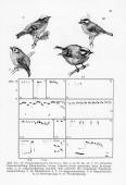 Das Aktionssystem von Winter- und Sommergoldhähnchen (Regulus regulus, R. ignicapillus) und deren ethologische Differenzierung
