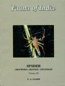 Spider Vol. III Oxyopidae - Fauna of India and the adjacent Countries