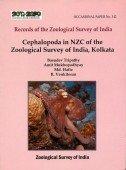 Cephalopoda in NZC of the Zoological Survey of India, Kolkata