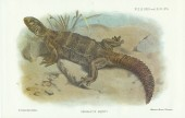 Herpetology of Arabia - with a preliminary List of the Reptiles and Batrachians of Egypt