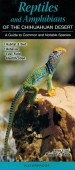Reptiles and Amphibians of the Chihuahuan Desert – A Guide to Common and Notable Species
