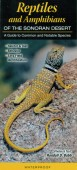 Reptiles and Amphibians of the Sonoran Desert – A Guide to Common and Notable Species