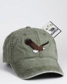 Bald Eagle – Weißkopfseeadler