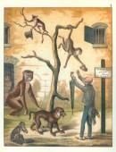 Wanderungen durch den Zoologischen Garten. Dargestellt in naturgetreuen Abbildungen der Thiergruppen des Zoologischen Gartens zu Berlin