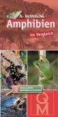 Heimische Amphibien im Vergleich