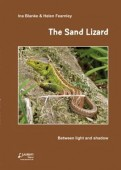 The Sand Lizard-Between light and shadow
