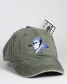 Blue Jay – Blauhäher