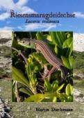 Die Riesensmaragdeidechse Lacerta trilineata - In ihrem Lebensraum und menschlicher Obhut
