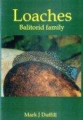 Loaches – Balitorid family