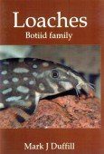 Loaches – Botiid family