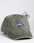 Eastern Bluebird – Rotkehlhüttensänger