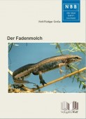 Der Fadenmolch  Lissotriton helveticus
