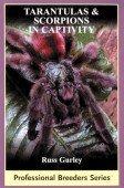 Tarantulas & Scorpions in Captivity
