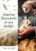 Growing Barn Owls in my Garden