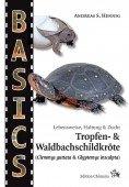 Tropfen-  und Waldbachschildkröte (Clemmys guttata & Glyptemys insculpta)