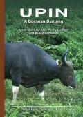 Upin - A Bornean Banteng