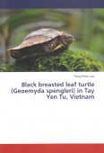 Black breasted leaf turtle (Geoemyda spengleri) in Tay Yen Tu, Vietnam
