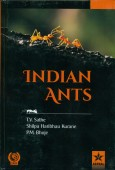 Indian Ants