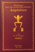 Abbildungen neuer oder unvollständig bekannter Amphibien, nach der Natur oder dem Leben entworfen – TAFELBAND