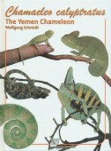 Chamaeleo calyptratus – The Yemen Chameleon